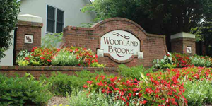 Woodland Brooke