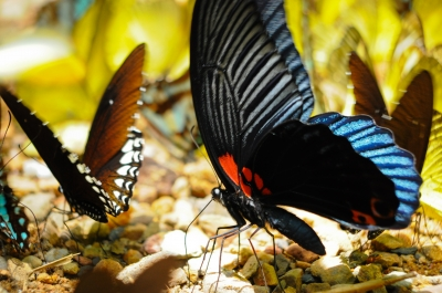 """Butterfly"" by samurai"